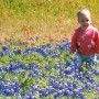 Texas Bluebonnet Wildflower Field