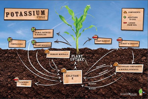 Potassium Poster